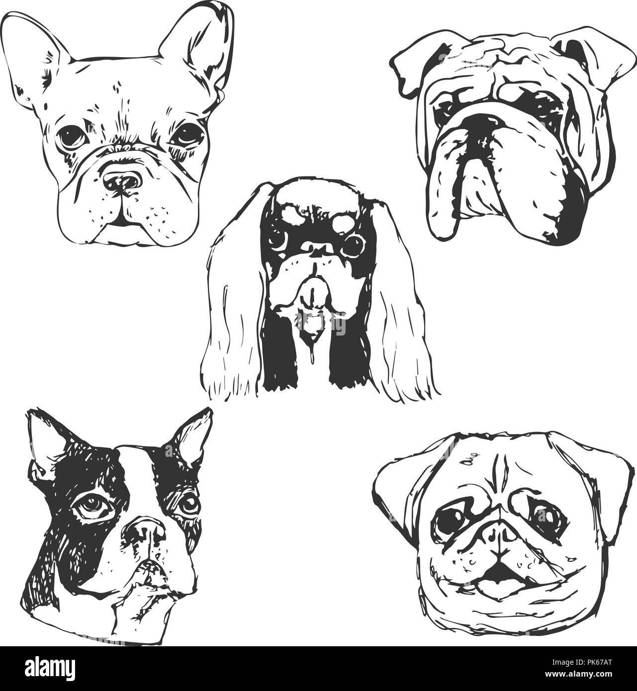 Dog Vector Illustration Hand Drawn Dog Portraitssketch Of Purebred