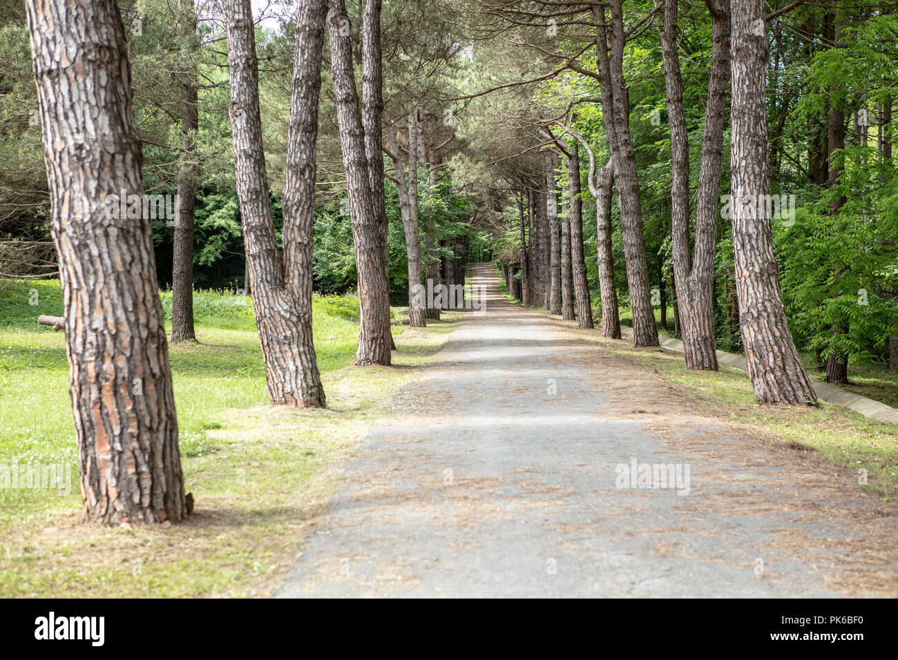 Rural Road Lined By Old Trees Nature Background Stock Photo Alamy