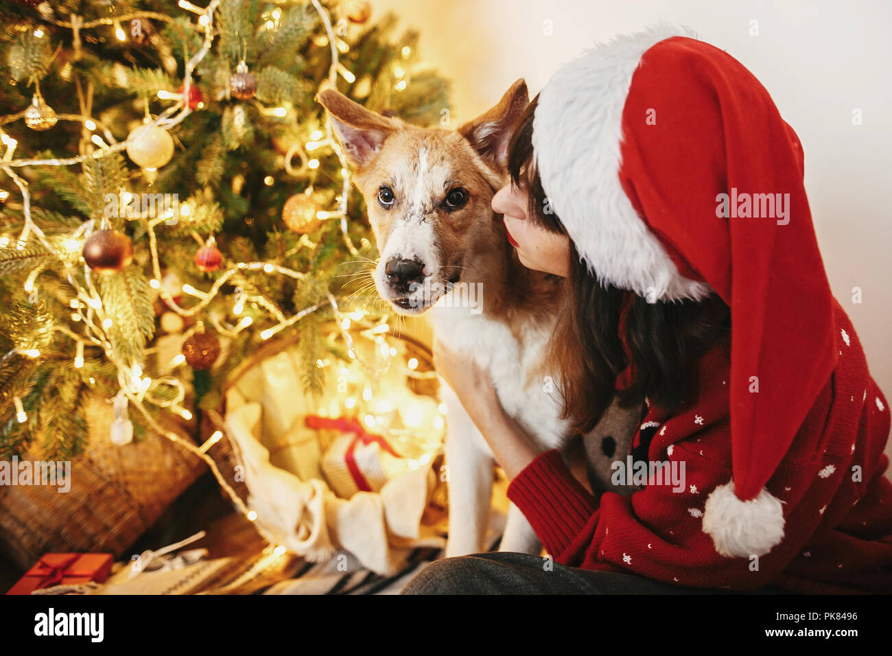71f5e8f9a60 family warm atmospheric moments in winter holidays. happy girl in santa hat  hugging with cute dog on background of golden beautiful christmas tree w