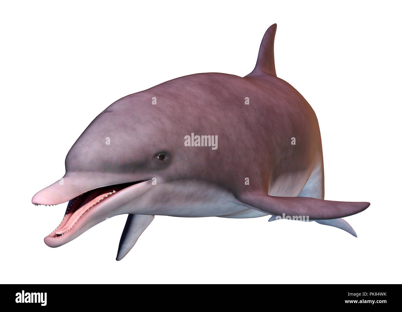 3D rendering of a dolphin isolated on white background - Stock Image