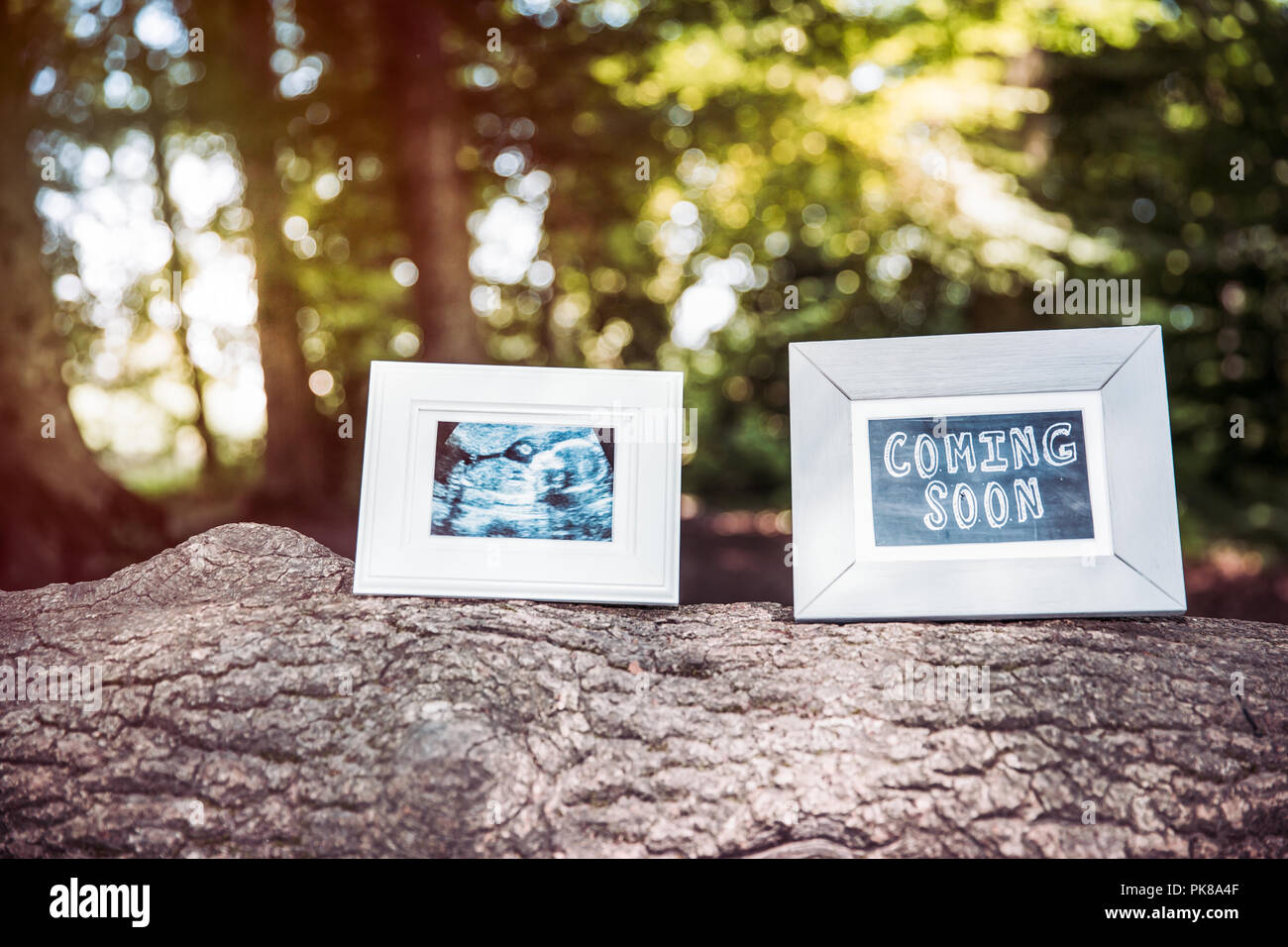 Baby Ultrasound and Coming Soon Photo Frames on Tree Trunk in Forest ...