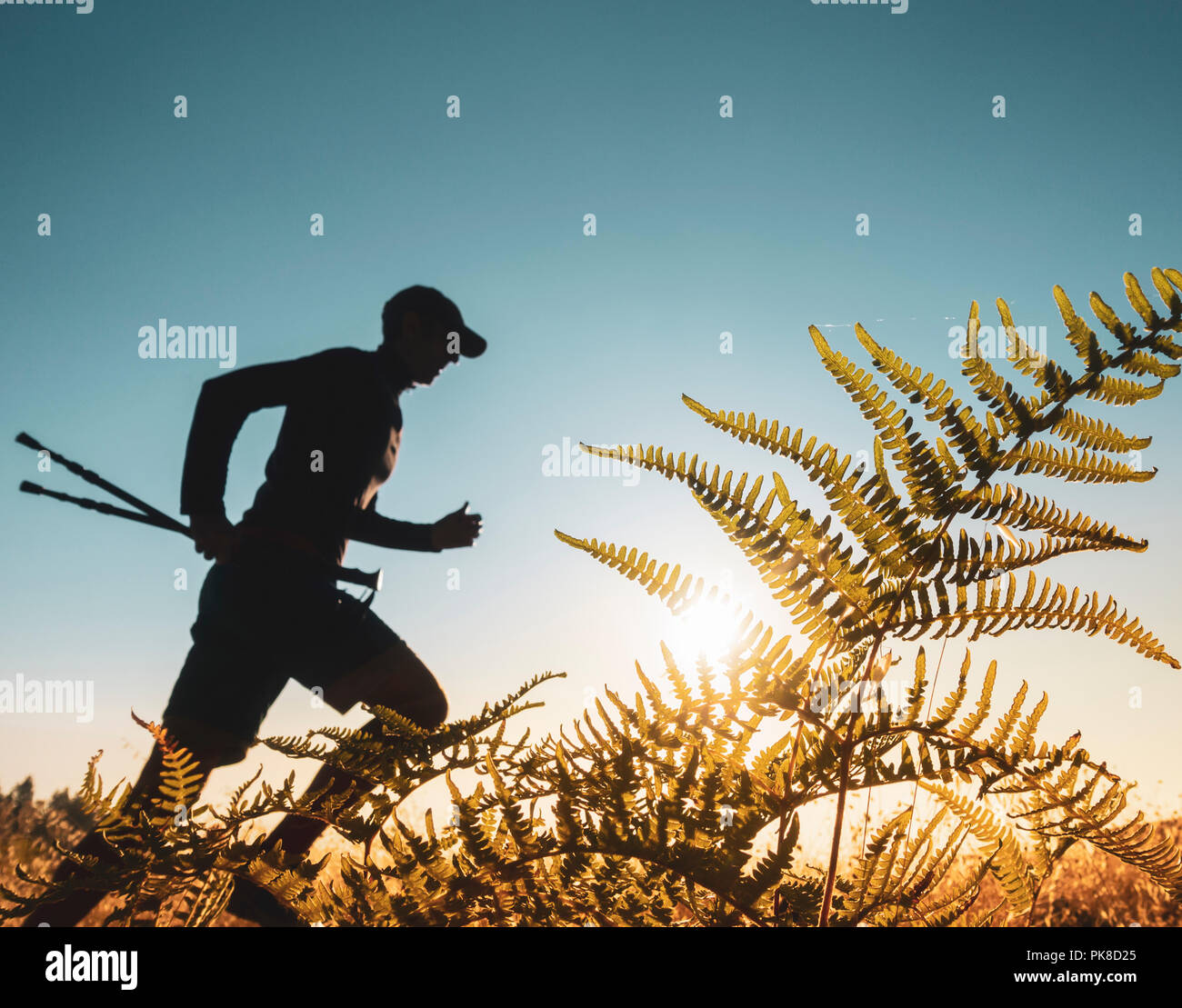 Trail runner running past Pteridium aquilinum (bracken, brake or common bracken) at sunrise - Stock Image