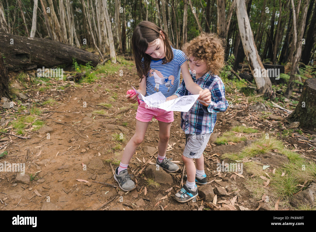 Young kids reading a map on a bush trail children reading a map in the woods Stock Photo