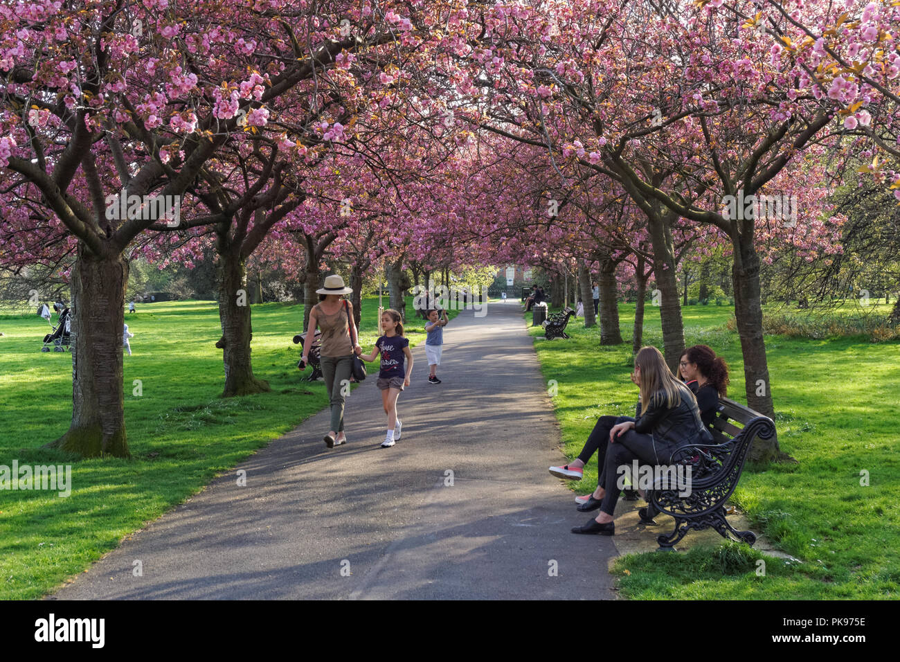 People enjoy spring weather beneath a canopy of cherry blossom in Greenwich Park, London, England, United Kingdom, UK - Stock Image