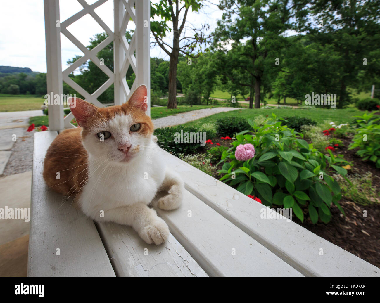 OUtdoor house cat resting on a railing. - Stock Image
