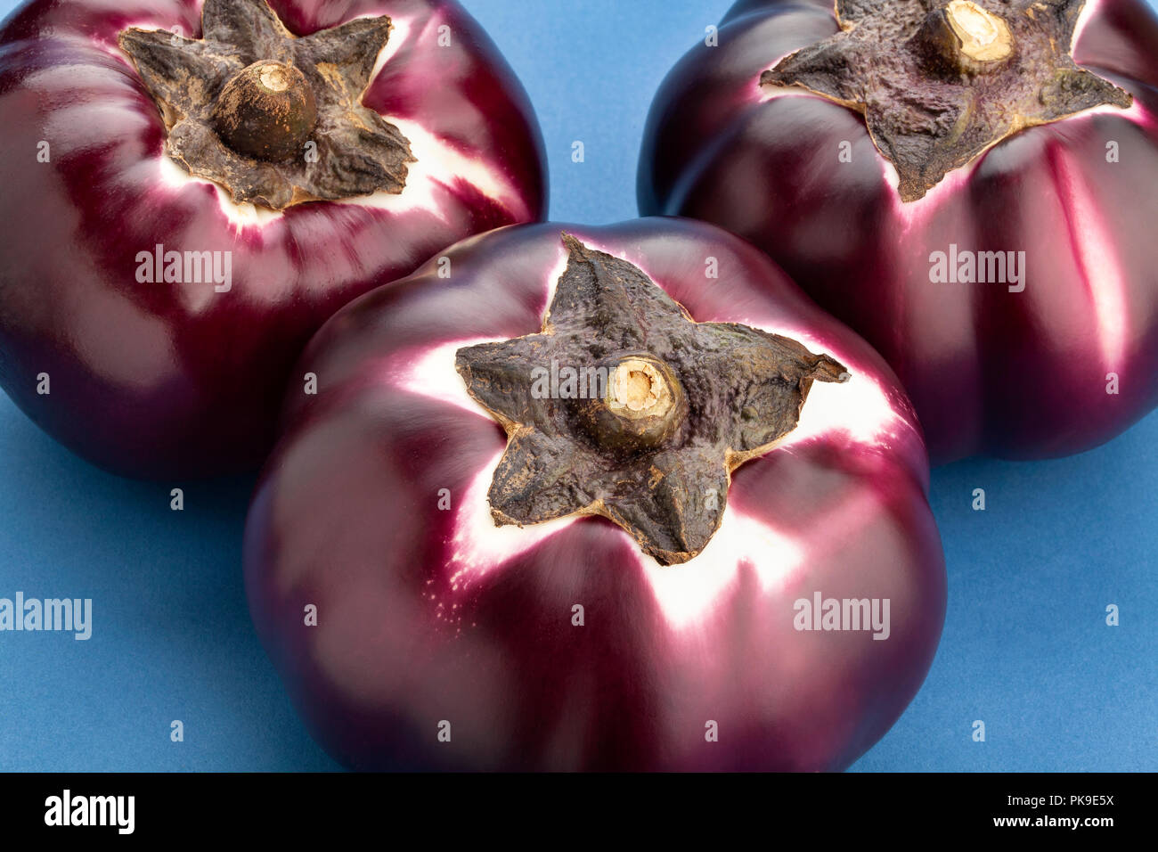 round mauve eggplant on blue background - Stock Image
