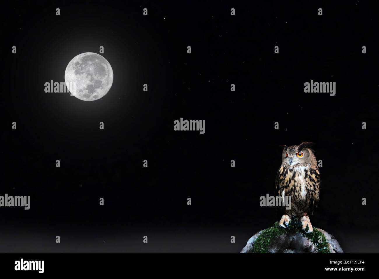 Full moon and star on night sky with owl perched on rock. Stock Photo
