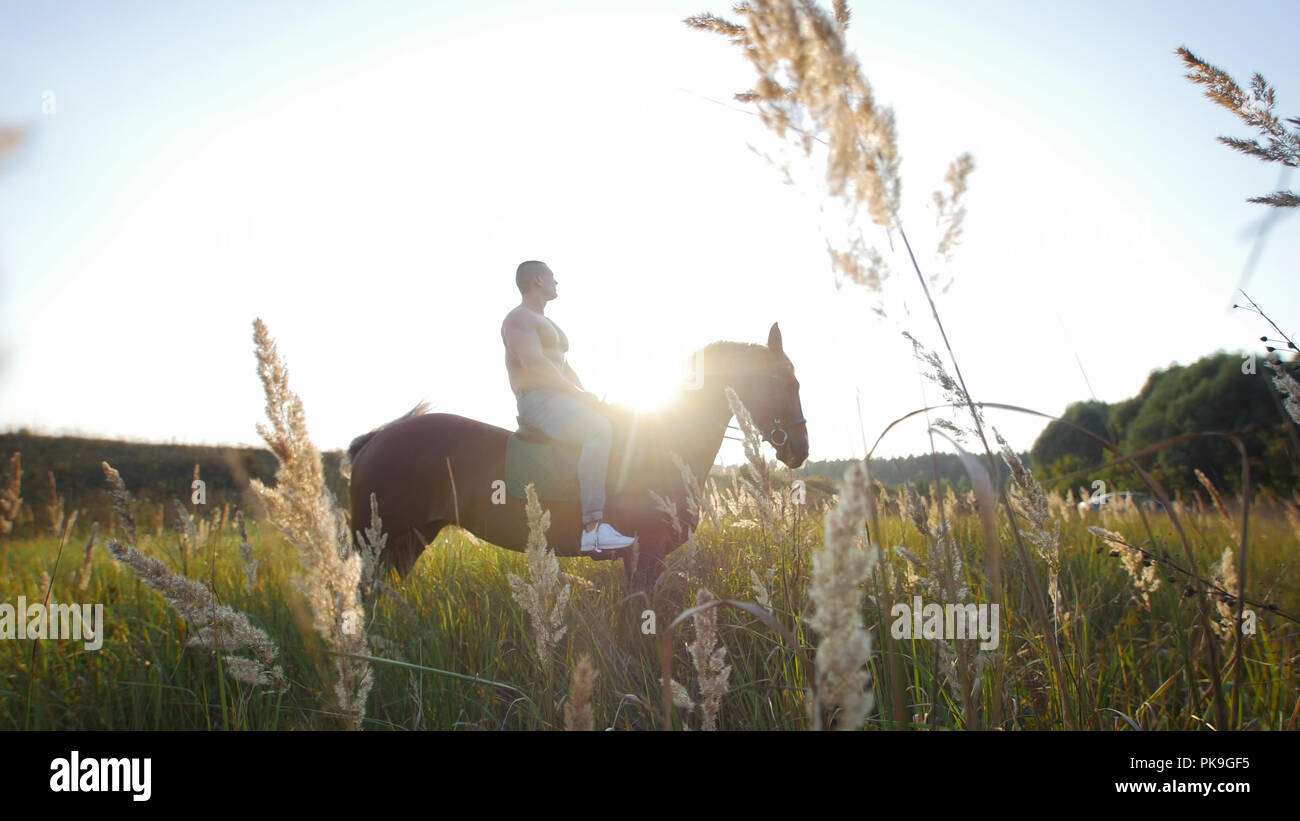 A strong man with a muscular body sits on a horse in the middle of beautiful nature - Stock Image