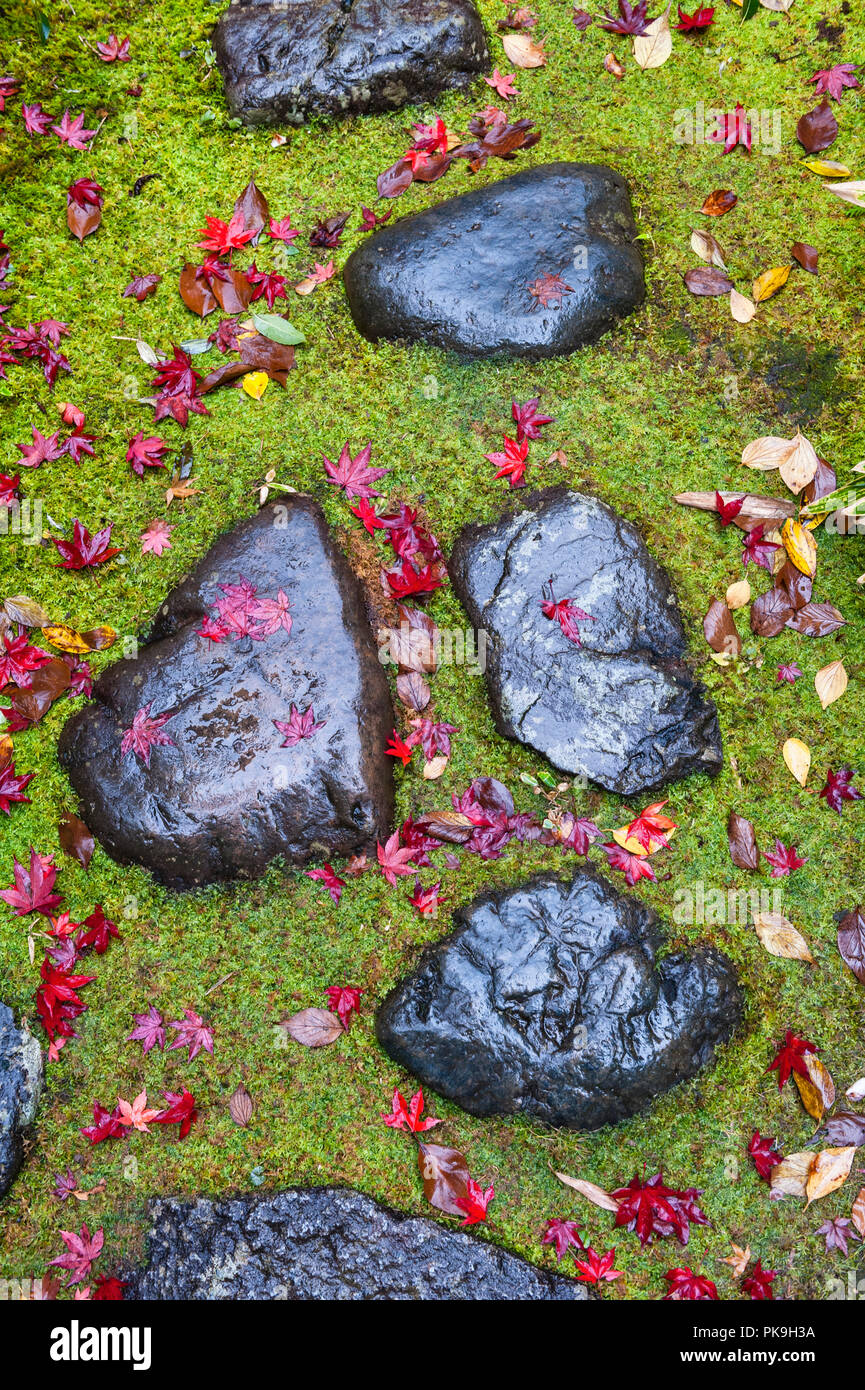 Daitoku-ji, Kyoto, Japan. Wet stepping stones and fallen maple leaves in autumn, Koto-in zen temple - Stock Image