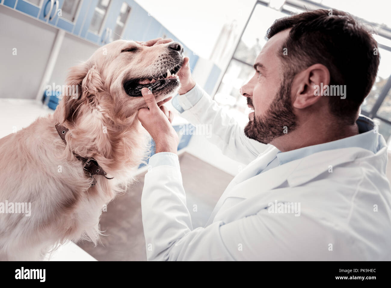 Serious dog listening to his doctor - Stock Image