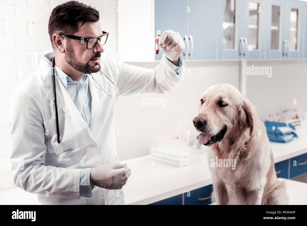 Serious veterinary looking at test tube - Stock Image