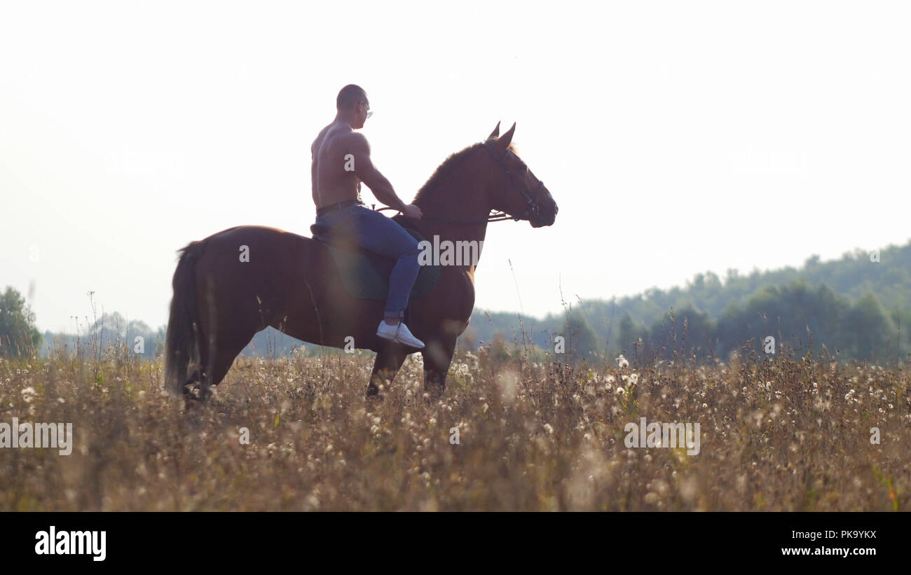 A man with a powerful physique with a bare torso walks on a horse in nature - Stock Image