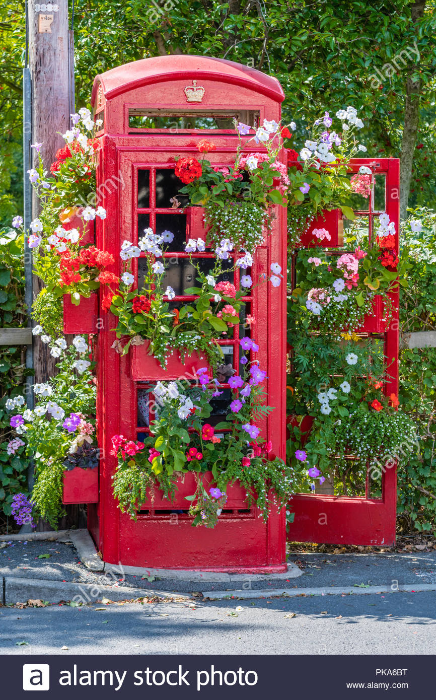 Old Red Telephone Box in Bloom - Stock Image