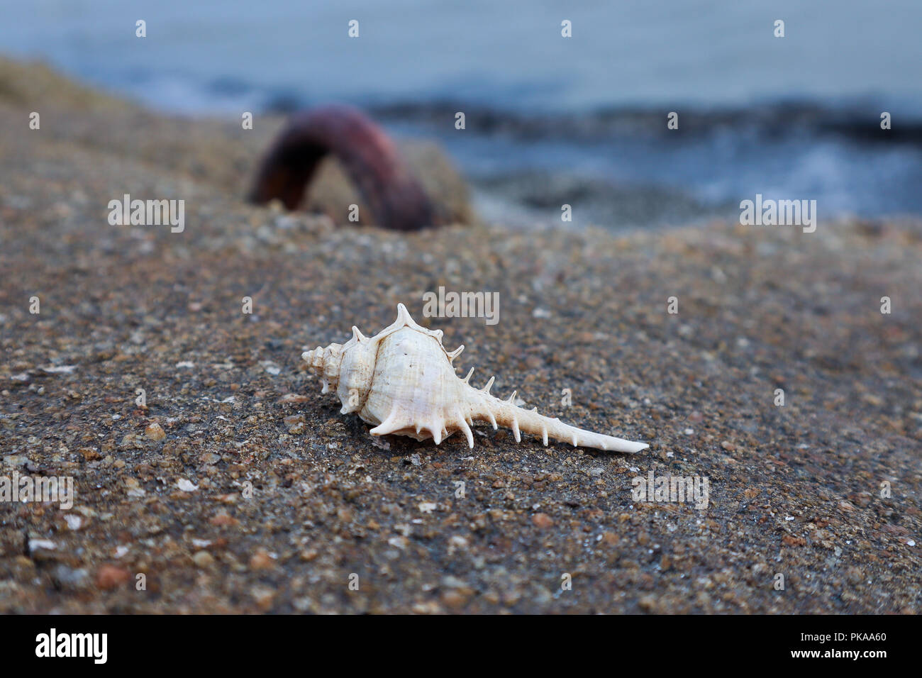 Unique pointy seashell on the concrete wall by the seaside - Stock Image