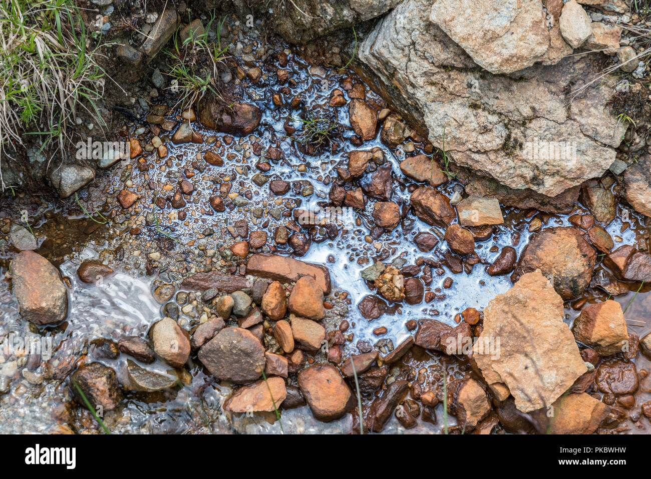 Bio film by accumulation of micro organisms on the water surface, Austria - Stock Image