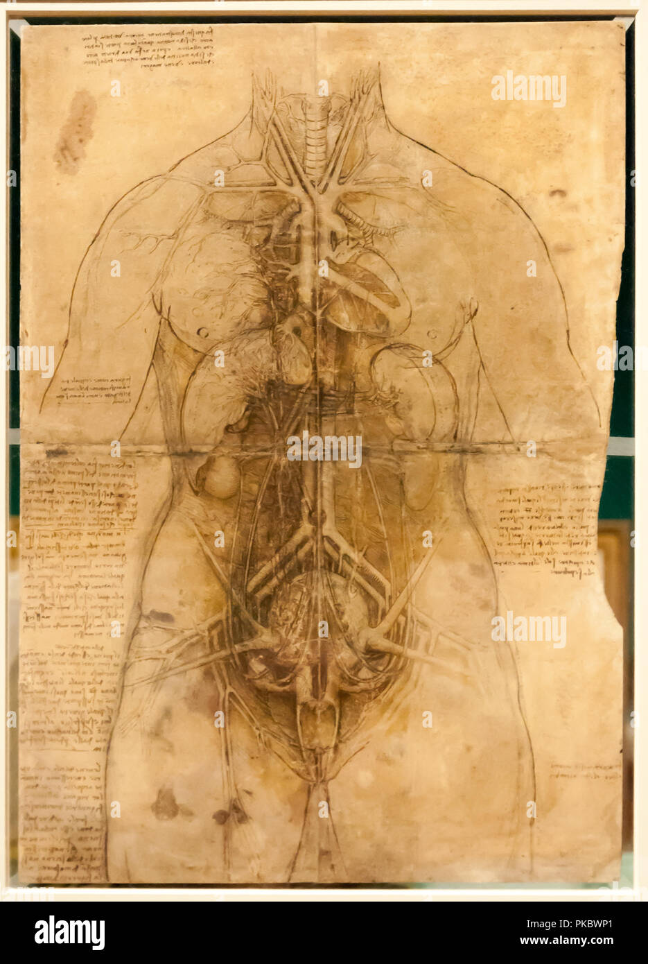 Leonardo da Vinci's human vital organs anatomical drawing at The Queen's Gallery, London, England, UK - Stock Image