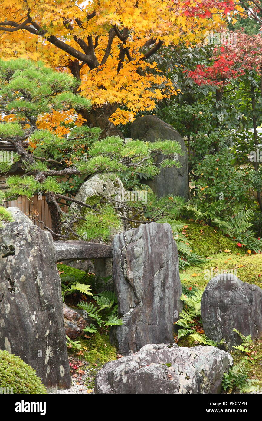 Japan in autumn (red maple trees in japanese gardens of Kyoto) Stock Photo