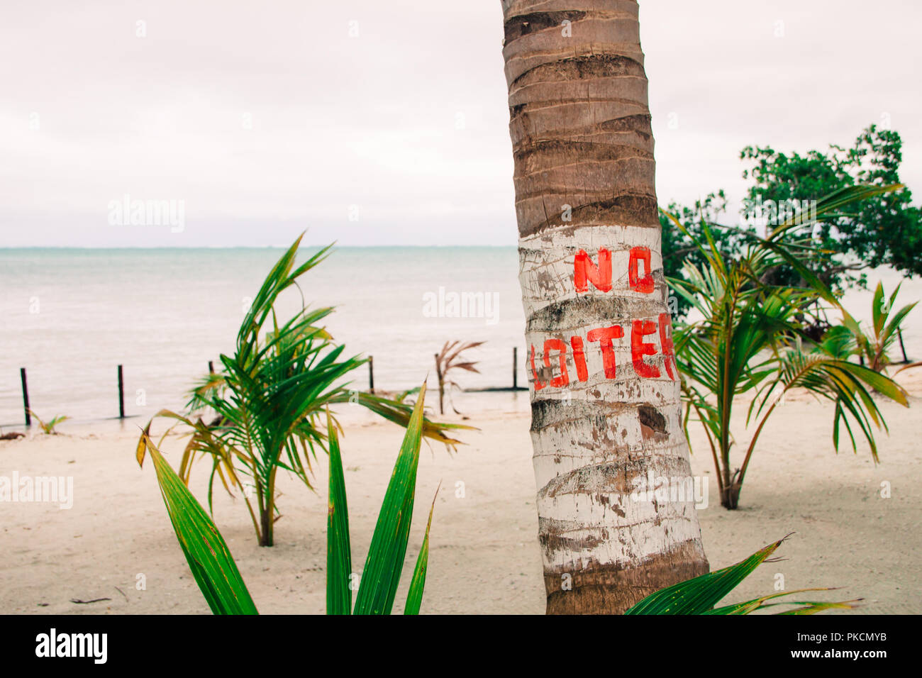 No Loiter Sign on Palm Tree and Overcast Caribbean Sea - Stock Image