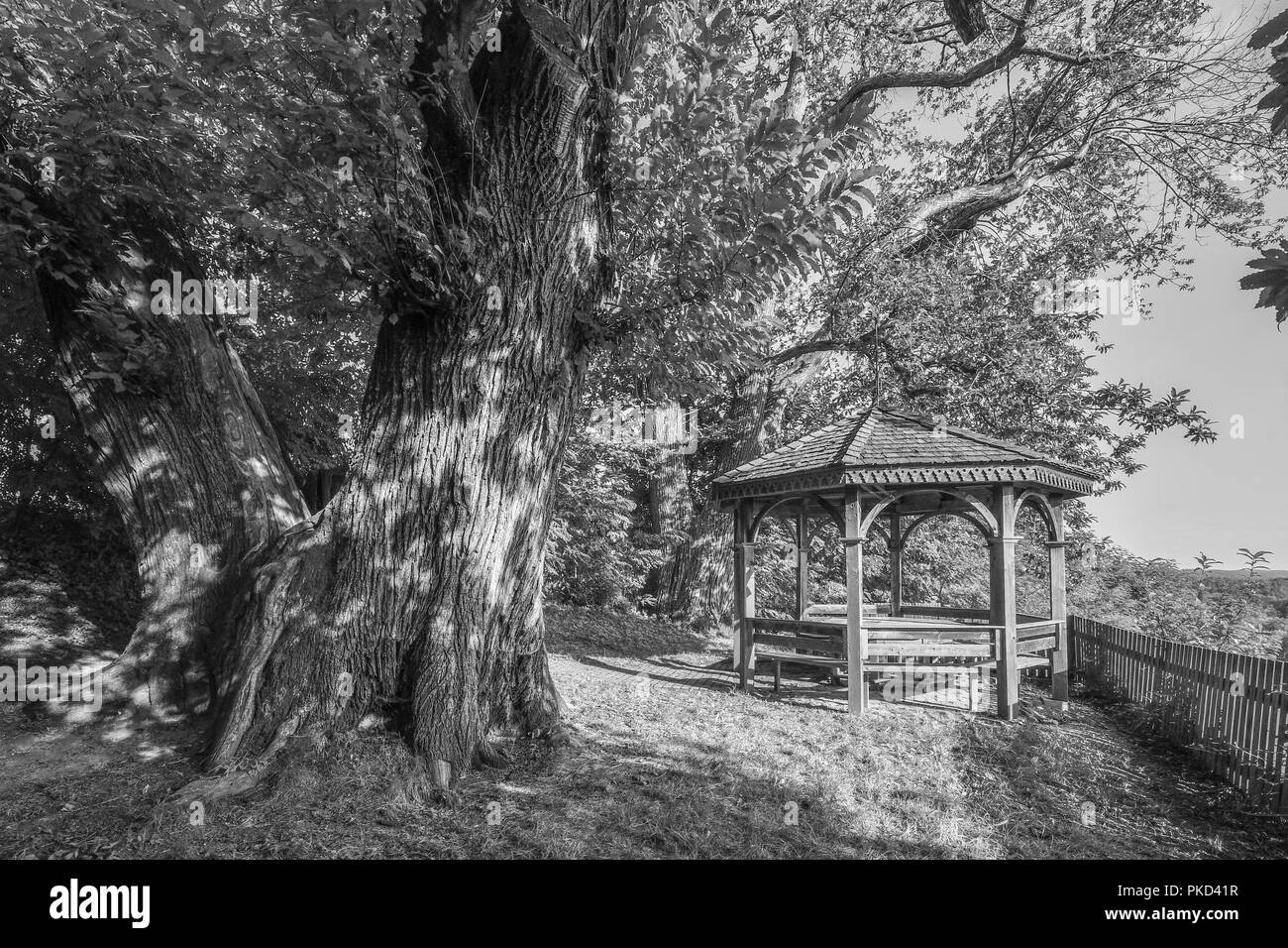 romantic pergola underneath big old tree - Stock Image