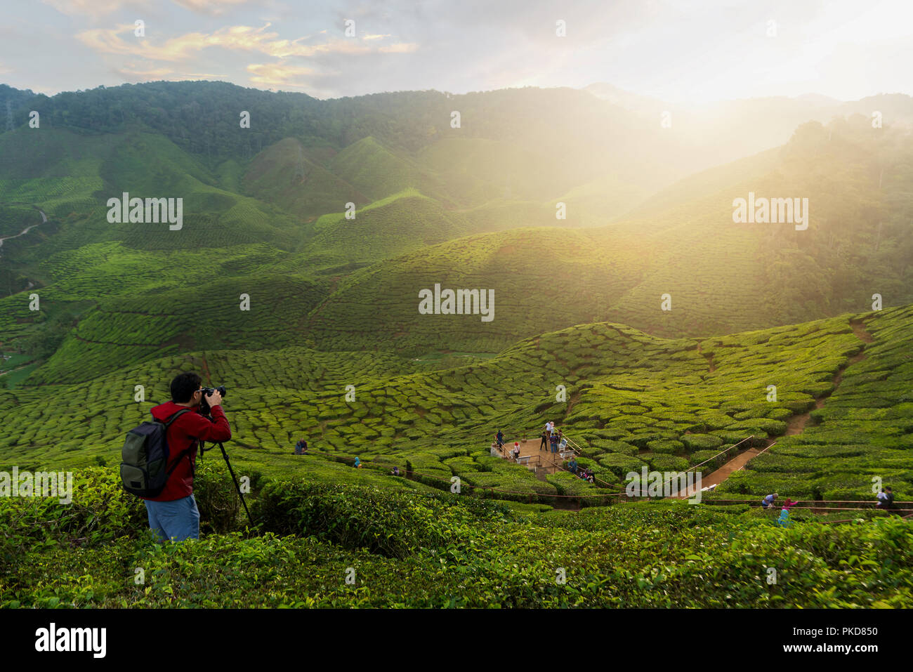 Young asian photographer traveling into tea fields with mist. Young man traveler take a photo of mountain tea field with foggy, Enjoying tea plantatio - Stock Image