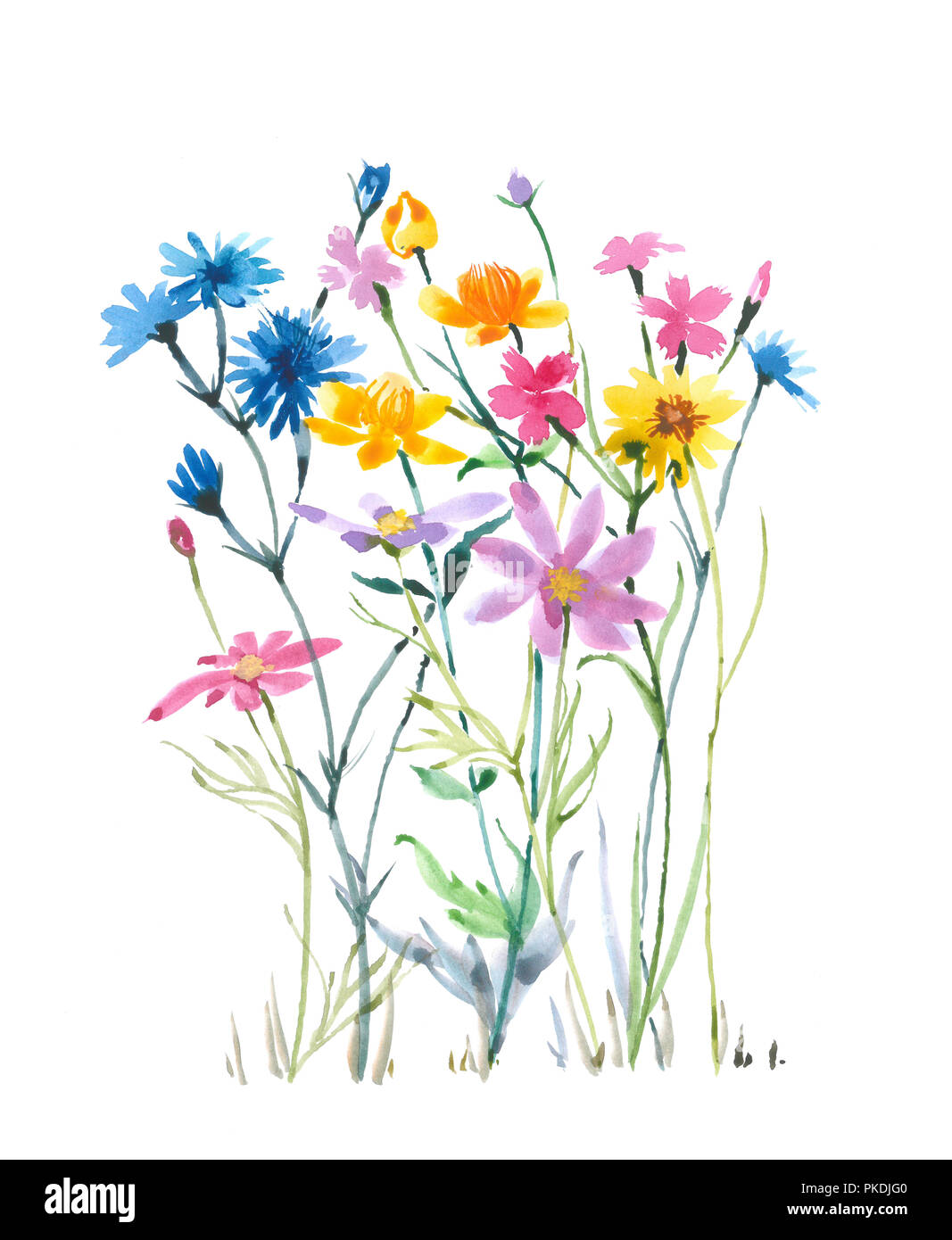 Romantic Wild Flowers Watercolor Flowers Watercolor Background