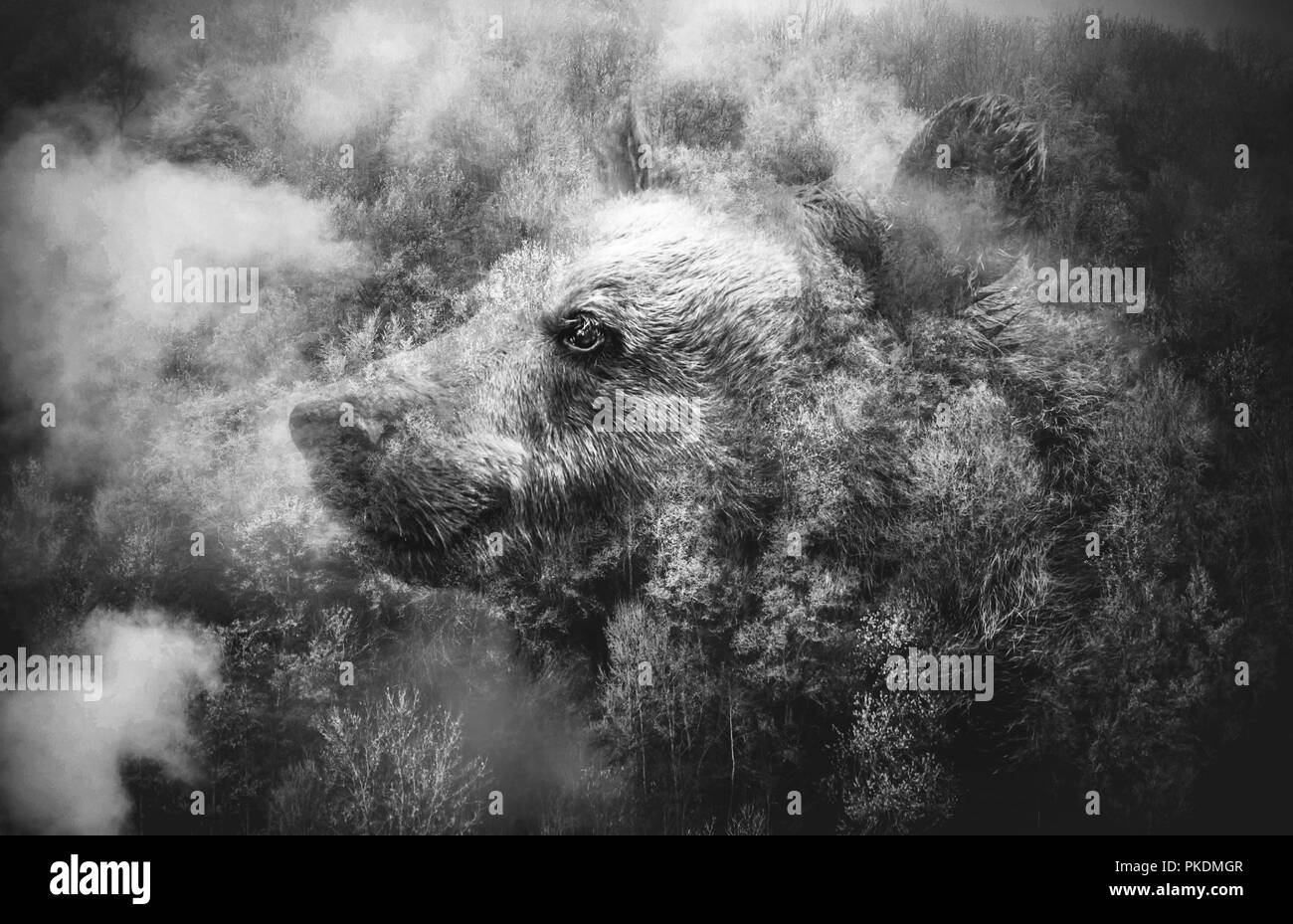Black and White Collage: Bears Head and the Misty Forest. Double Exposition. - Stock Image