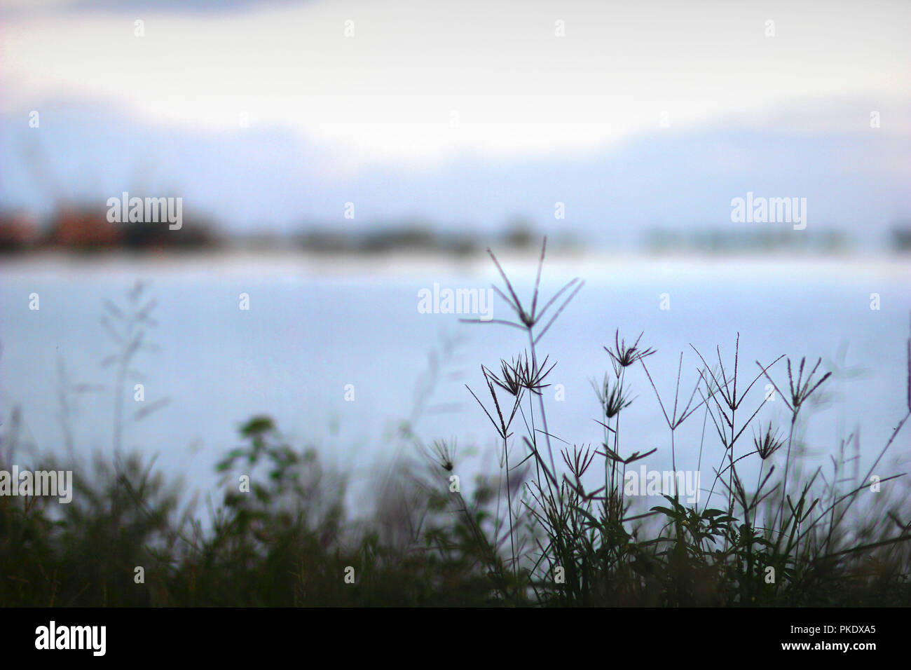 Malubog Lake in tranquil scene, Lake, River, Calm Water, Grass, blue, low depth of field, background, Asia, Philippines, Cebu Province, Mountains - Stock Image