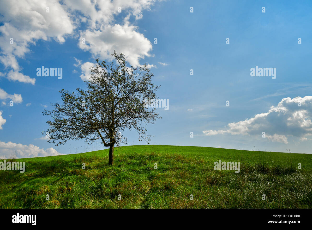 lonely tree on soft hill - Stock Image