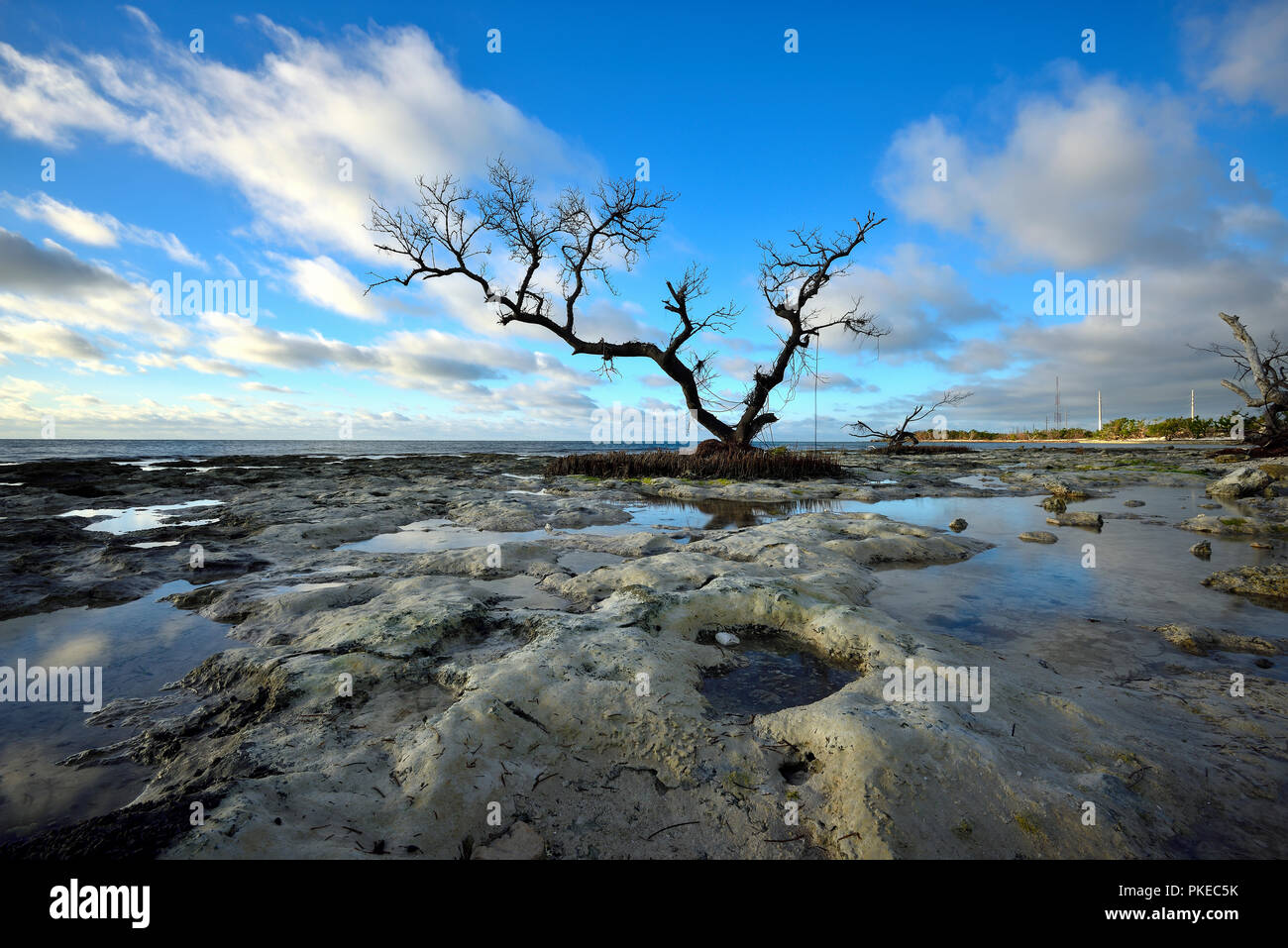Dead Tree in the midst of an eerie landscape at sunrise on