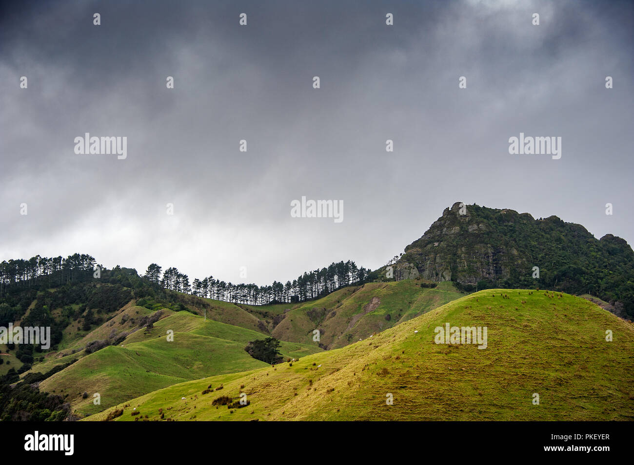 Rural scene on the Coromandel Peninsula, New Zealand. Green rolling hills, forested slopes, dark stormy sky - Stock Image