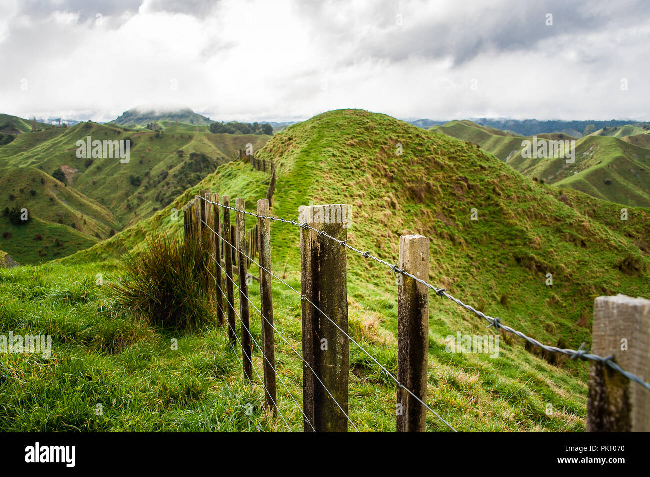 Fence posts stretch into the distance, the Tahora Saddle,Forgotten World Highway, New Zealand. Pastoral landscape with green hills and grey cloudy sky - Stock Image