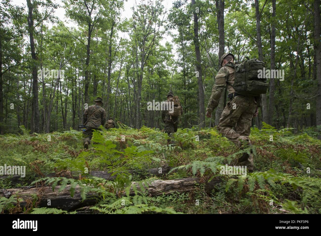 Medics of the forest: which representatives of the animal world clean the nature 79
