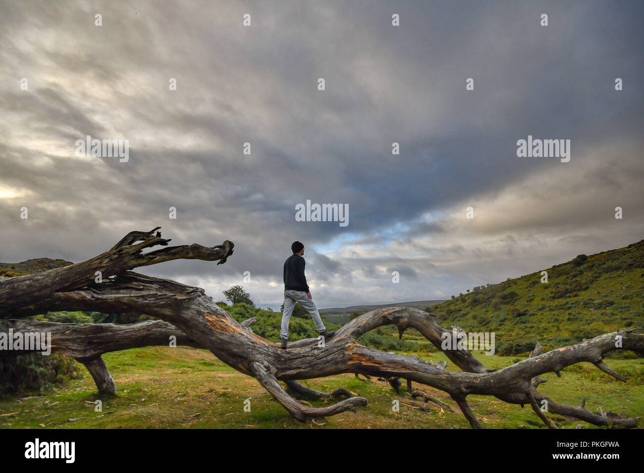 Man standing on fallen tree on Dartmoor looking towards a cloudy sky - Stock Image