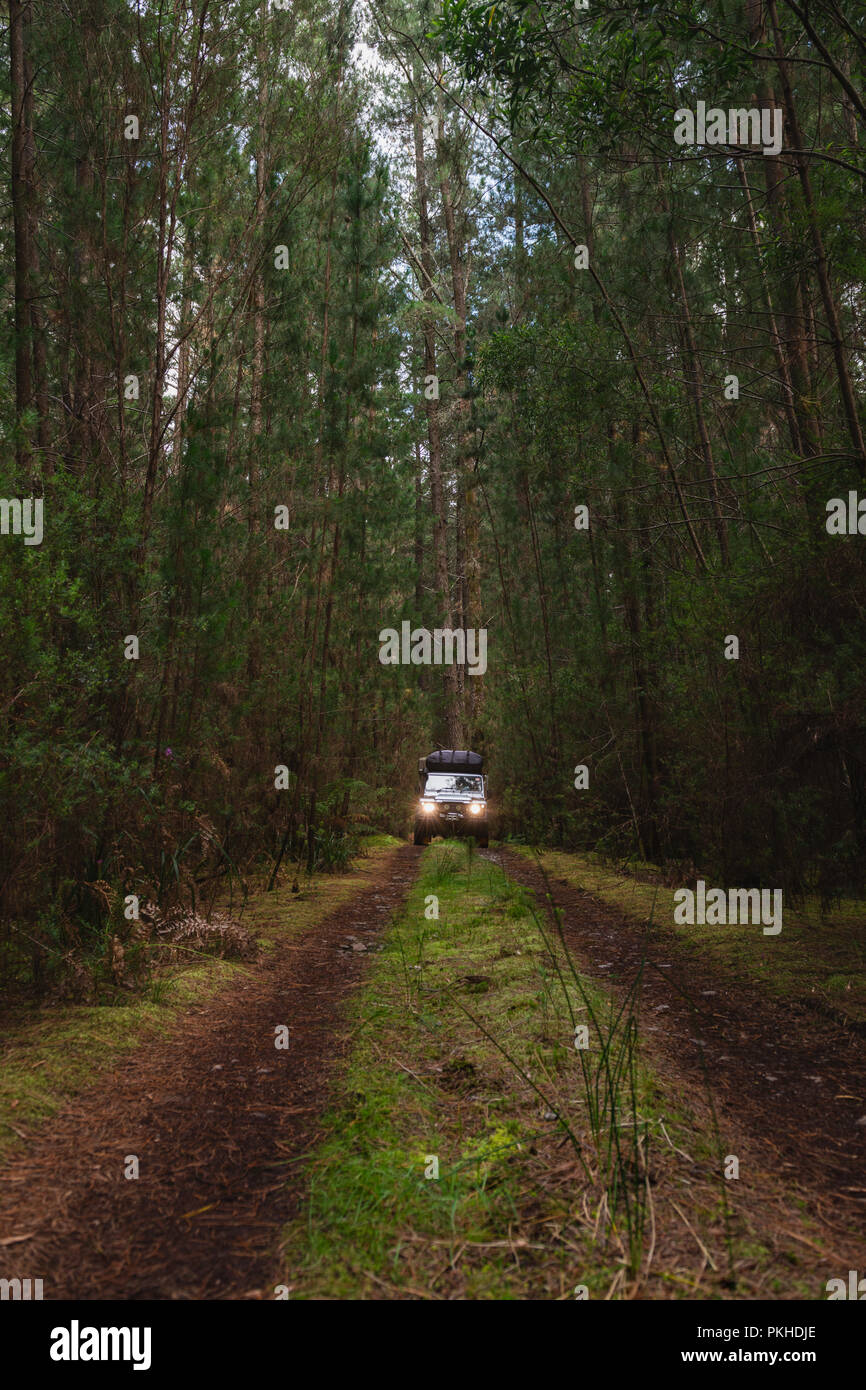 4x4 on secluded trail, Tasmania - Stock Image