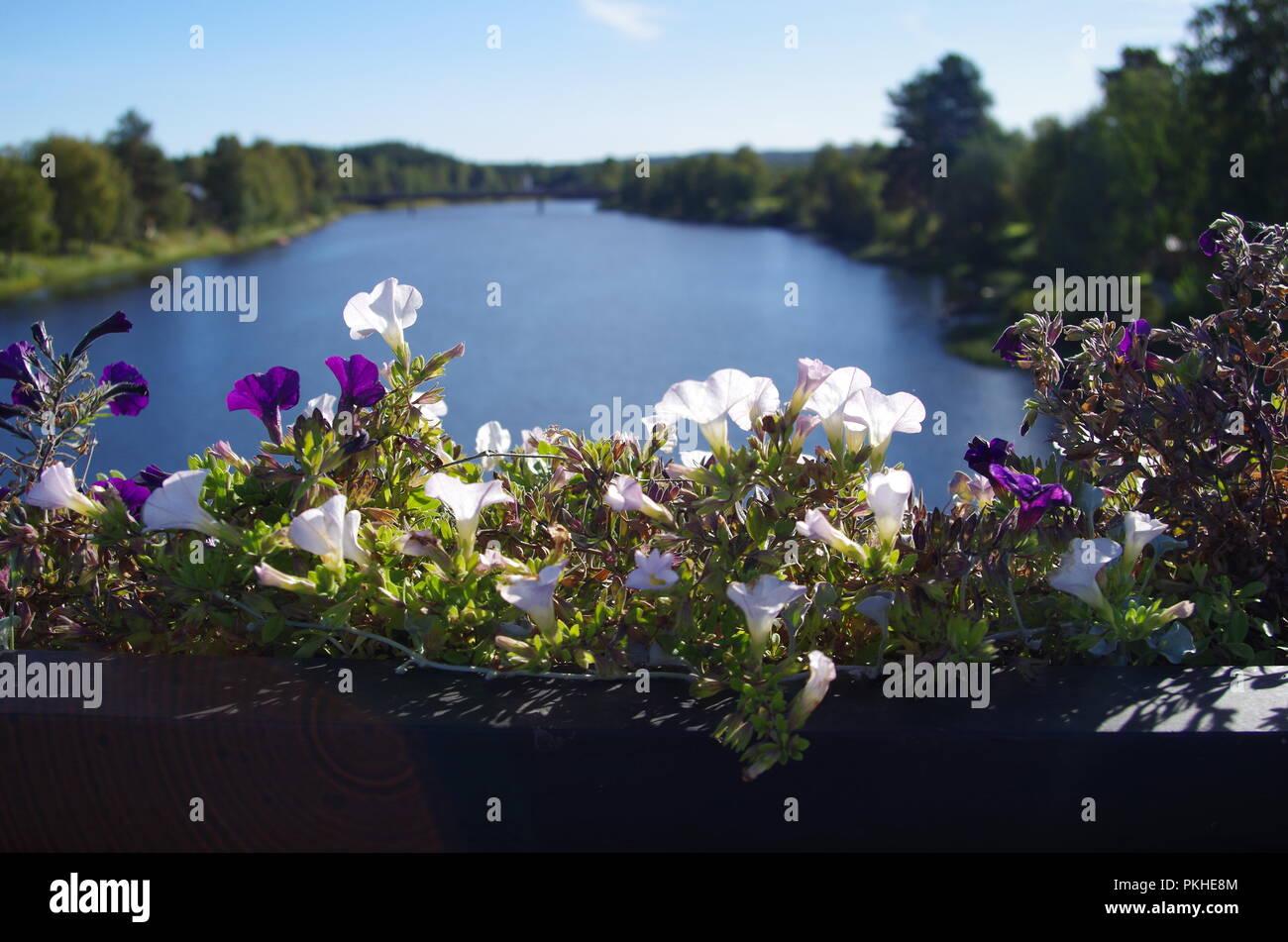 Beautiful river scene on a sunny autumn morning in Dalarna in Sweden - Stock Image
