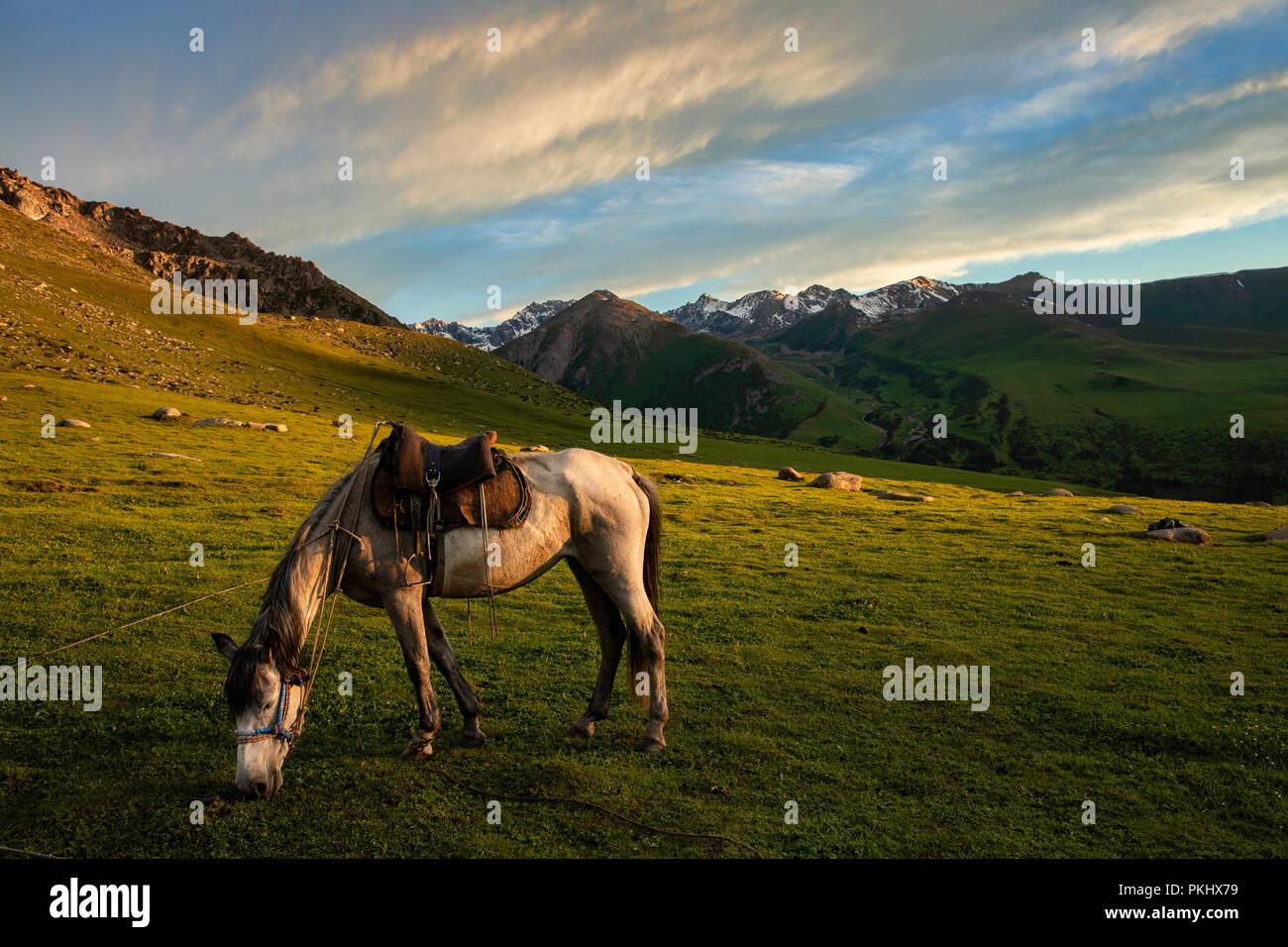 Horse grazes at golden hour with Terskey Ala-Too Mountain Range in background, Keskenkyia Loop trek, Jyrgalan, Kyrgyzstan - Stock Image