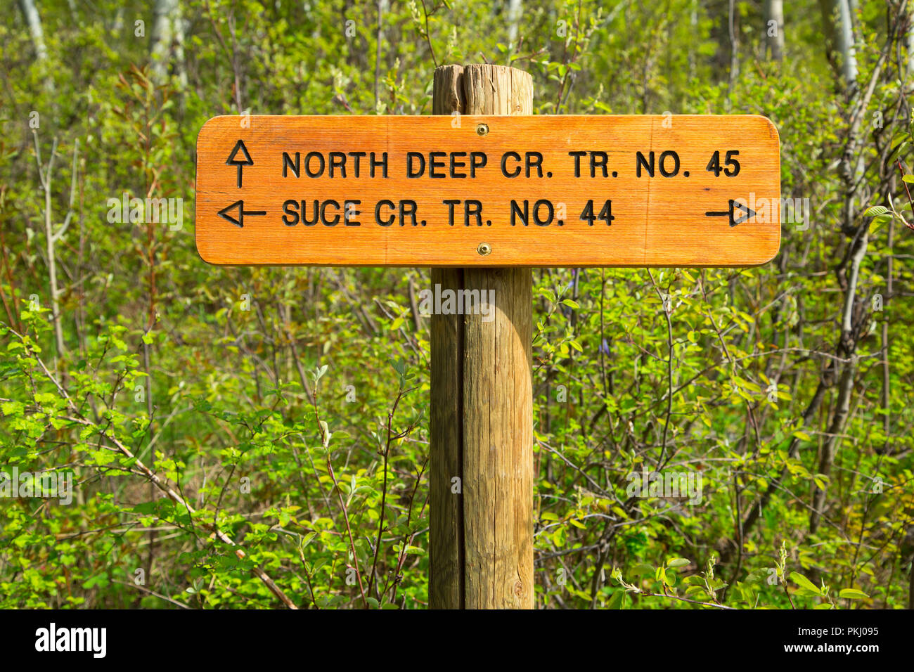 Junction sign along Suce Creek Trail, Gallatin National Forest, Montana - Stock Image
