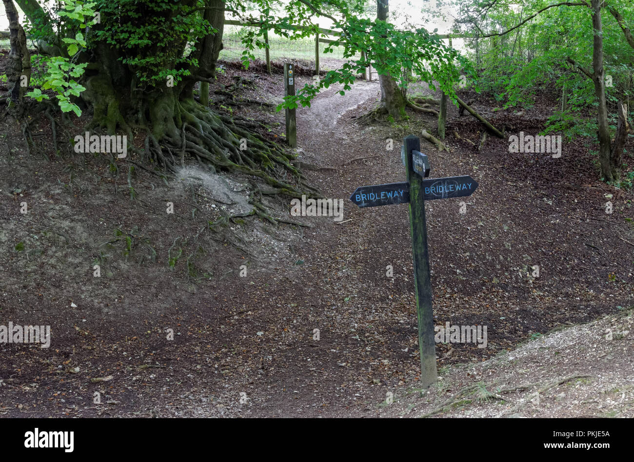 Bridleway and ridgeway sign on Coombe Hill in the Chiltern Hills, Buckinghamshire, England United Kingdom UK - Stock Image