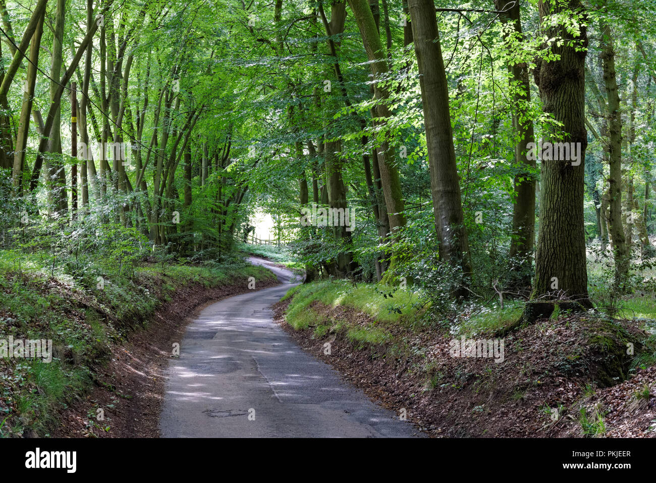 Local road in the Chiltern Hills, Buckinghamshire, England United Kingdom UK - Stock Image