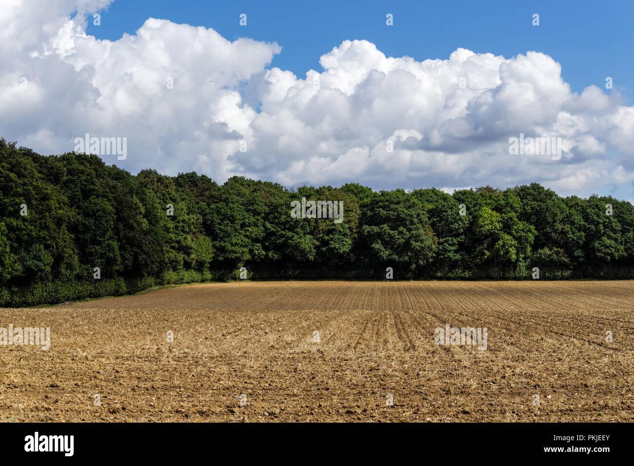 Rural landscape in the Chiltern Hills, Buckinghamshire, England United Kingdom UK - Stock Image