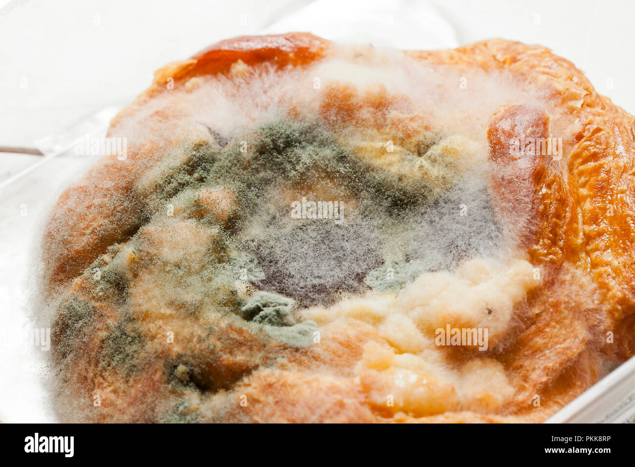 mold growing on cheese danish moldy food mouldy food food mold