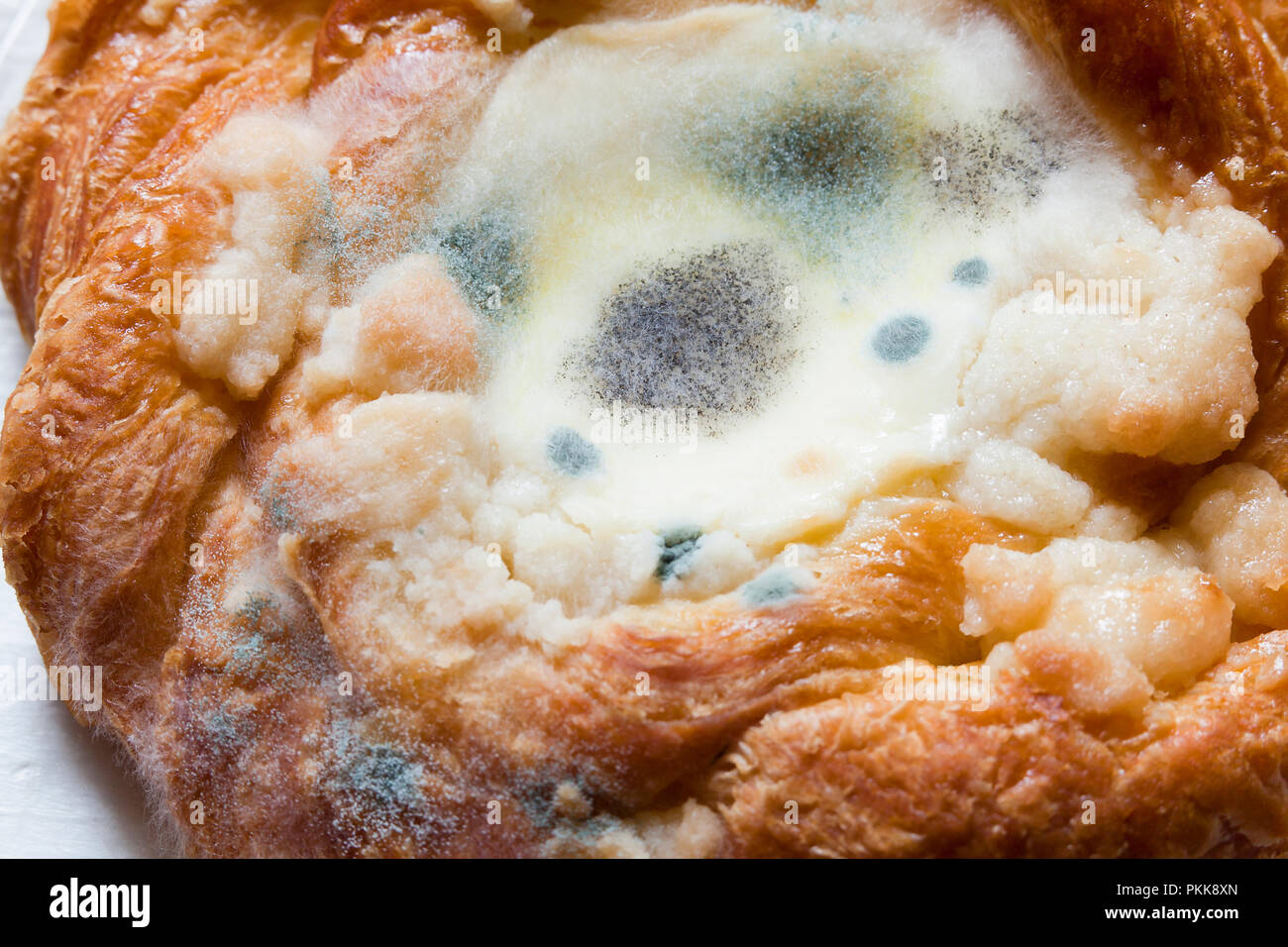 Mold growing on cheese danish (moldy food, mouldy food, food mold) - Stock Image
