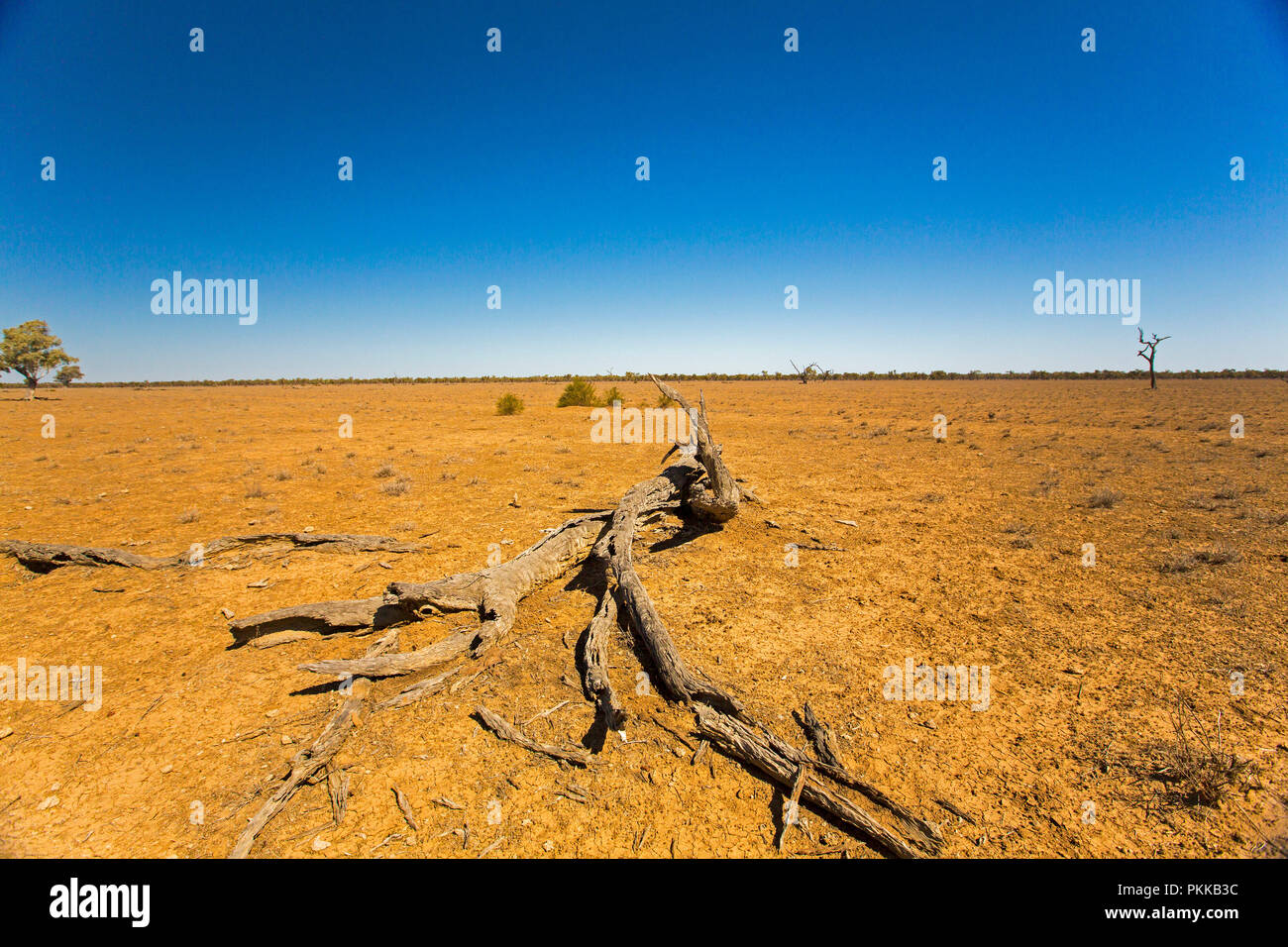 Australian outback landscape during drought with treeless red and stony plains stretching to horizon under blue sky in Queensland - Stock Image