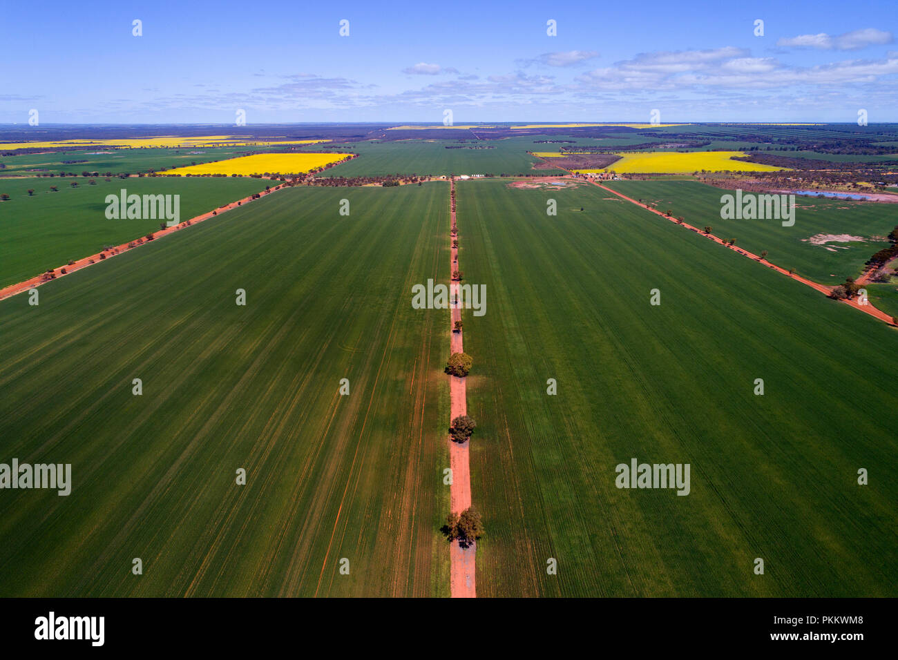 Aerial view of Wheat Crop, Midwest, Western Australia - Stock Image