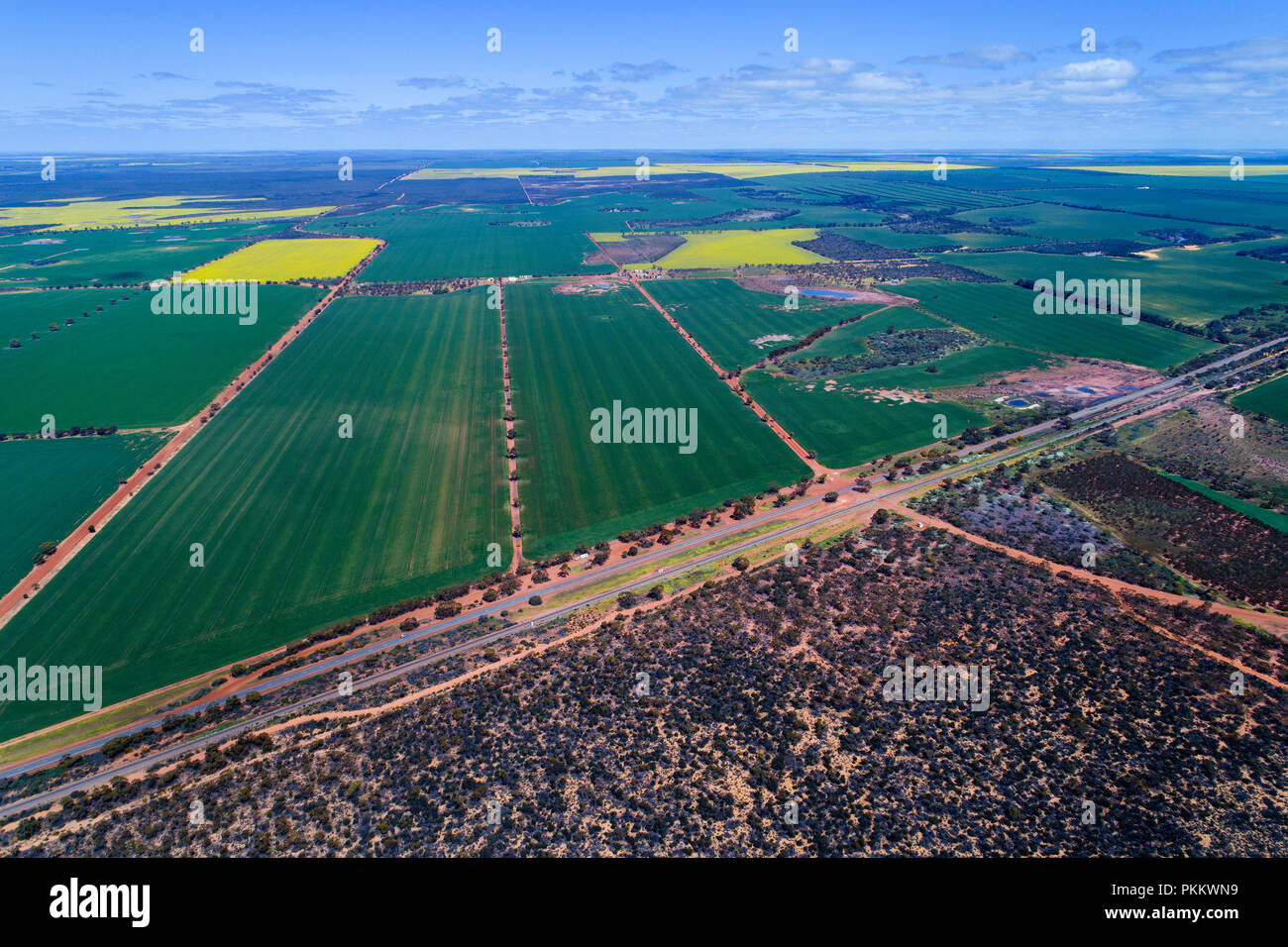 Aerial view of Wheat Crop, Midwest, Western Australia Stock Photo