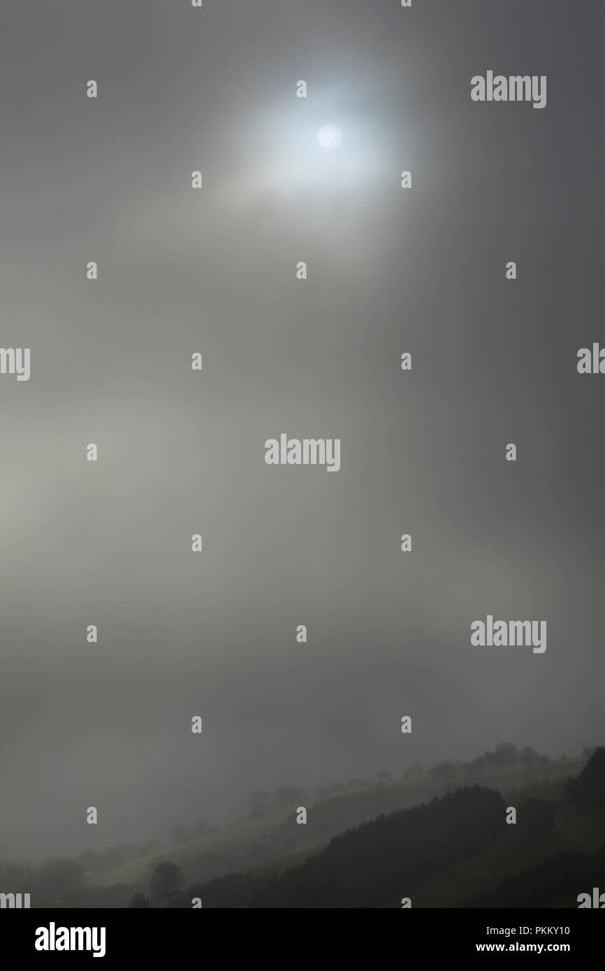 Sun shining through fog over trees - Stock Image