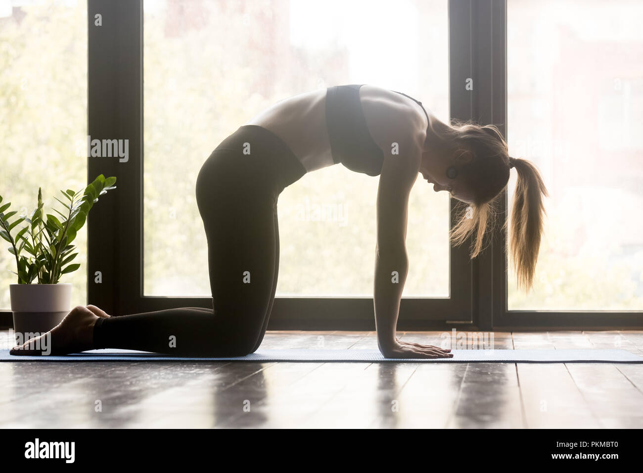 Young sporty woman doing pilates or yoga Marjaryasana pose - Stock Image