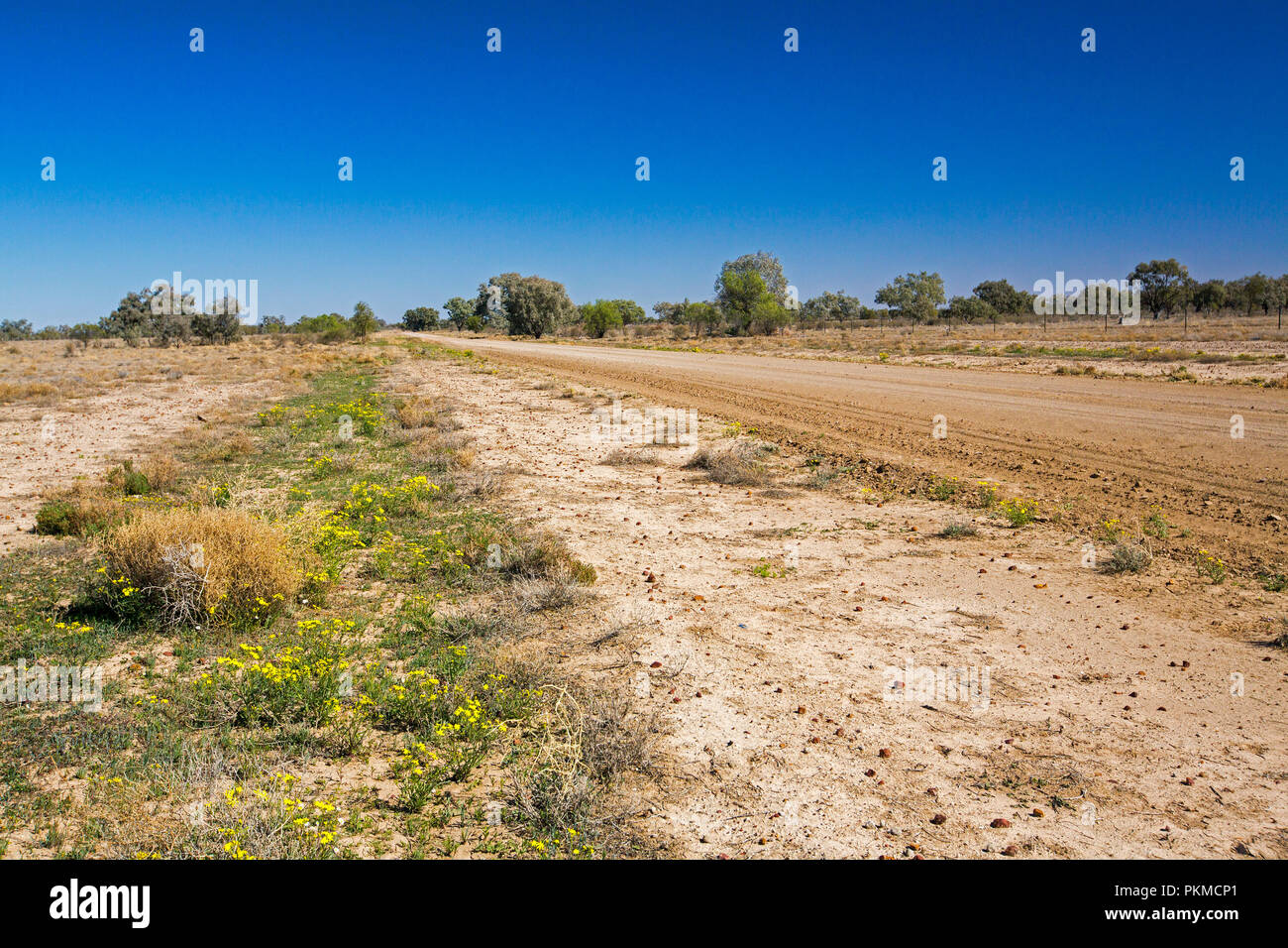 Australian outback road slicing through landscape daubed with sparse  vegetation & wildflowers & stretching to distant horizon under blue sky - Stock Image