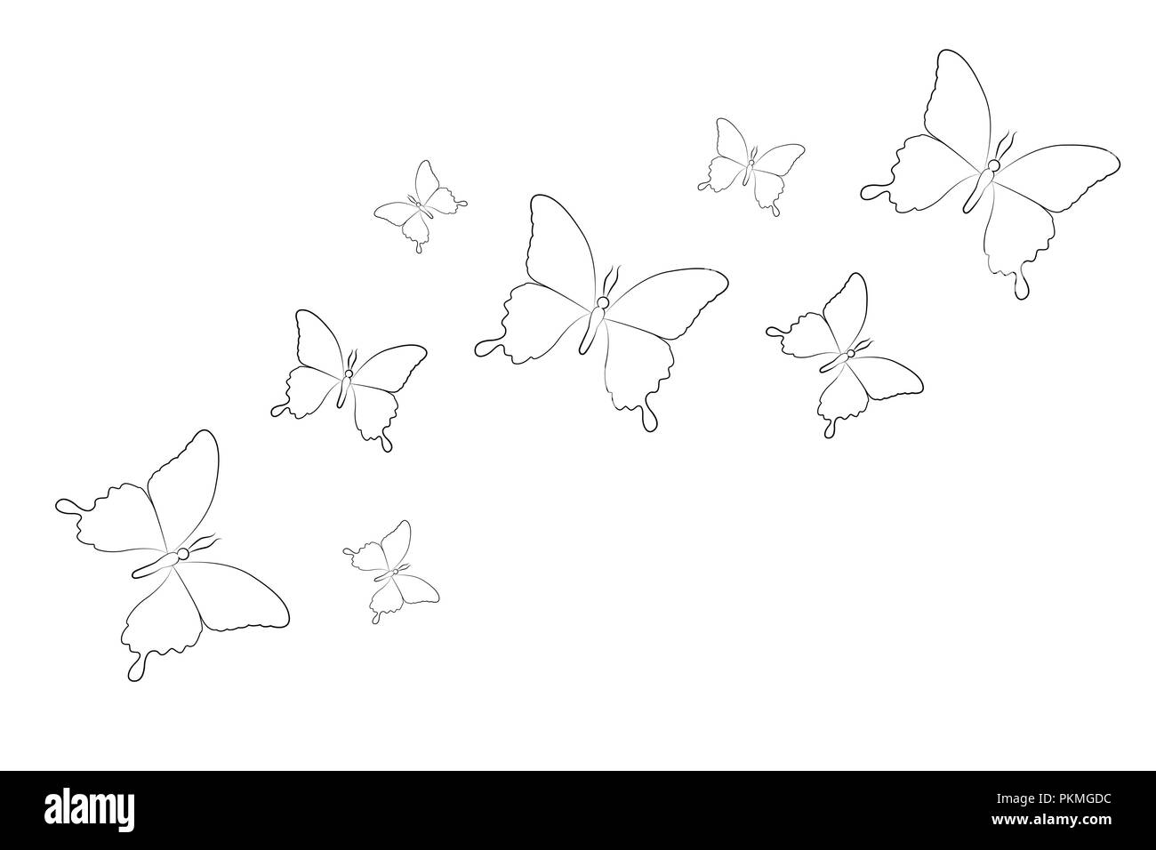 Set of line drawing butterfly isolated on a white background vector illustration eps10
