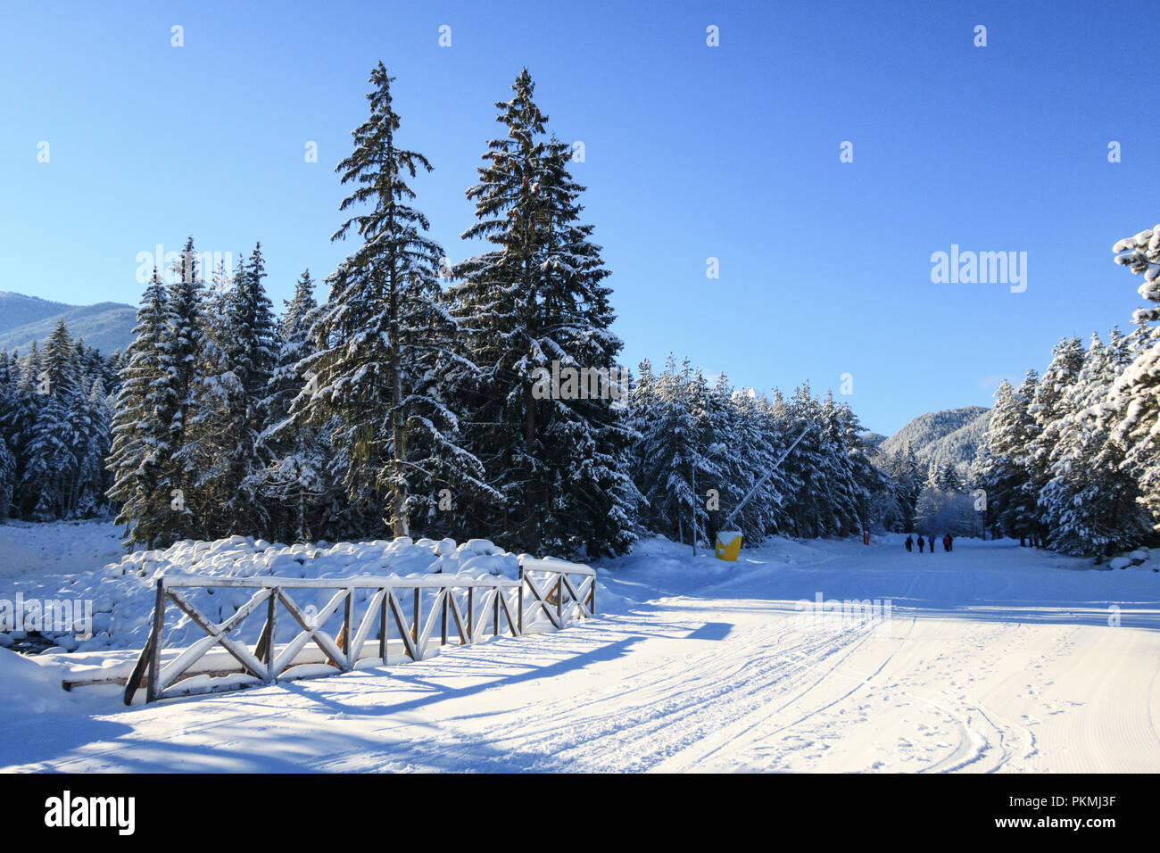 Bansko resort panoramic view with ski slope in the forest and snow trees, Bulgaria - Stock Image